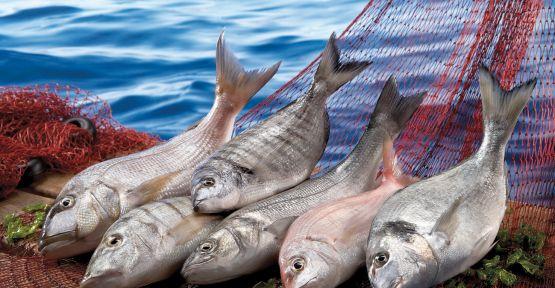 2022 yılını Balıkçılık ve Su Ürünleri Oldu!