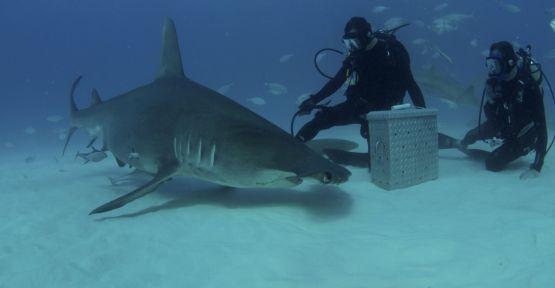 Köpekbalığı Haftası Discovery Channel'da 30. Yılını Kutluyor